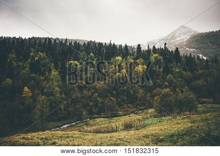 Autumn Coniferous Forest Landscape with mountains Travel serene scenic view moody weather