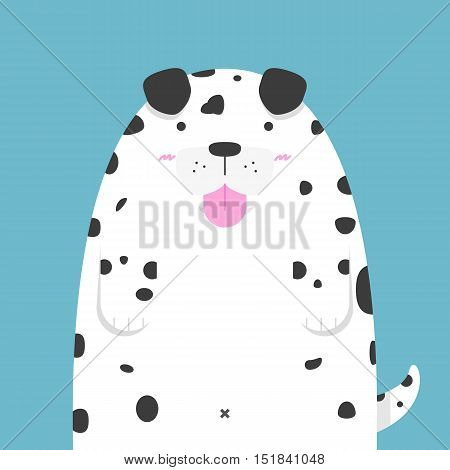 cute big fat Dalmatian dog on blue background