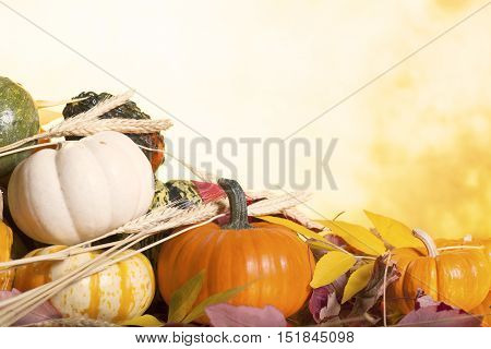 Assorted Pumpkins Gourds and Squash on a Blurred Autumn Background with Leaves and Wheat