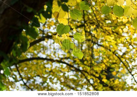 Beautiful yellow and leaves that signify the changing colors of autumn.