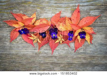 Autumn Composition. Various Colorful Grape Leaves And Pansies.