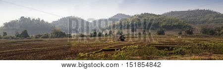 Indian educated farmer in his Sugar cane field, rural village Salunkwadi, Ambajogai, Beed, Maharashtra, India, South East Asia.