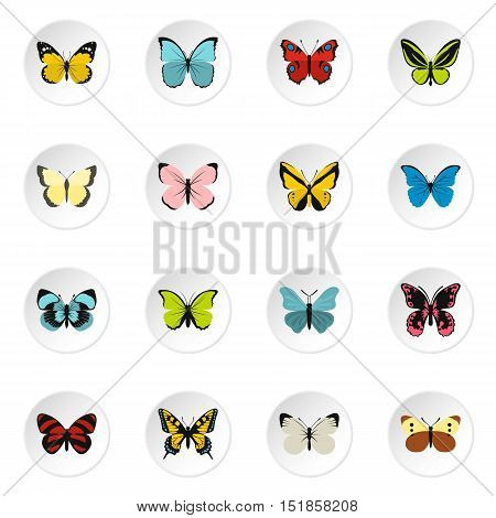 Butterfly icons set. Flat illustration of 16 butterfly butterfly vector icons for web