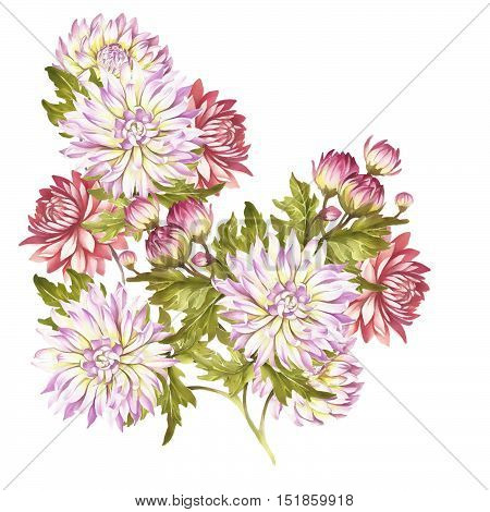 Image bouquet of chrysanthemum. Hand draw watercolor illustration.