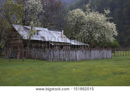 Farmhouse surrounded by flowering trees along the Carretera Austral  in the Aysen Region of southern Chile.