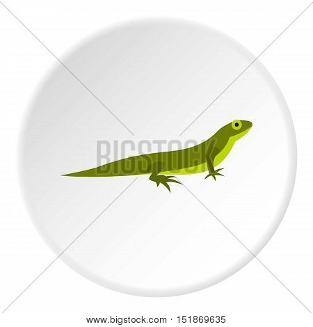 Little lizard icon. Flat illustration of little lizard vector icon for web
