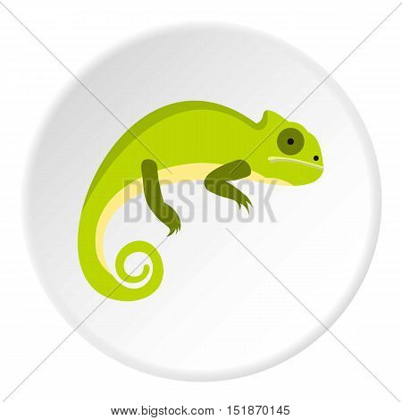 Green iguana icon. Flat illustration of green iguana vector icon for web