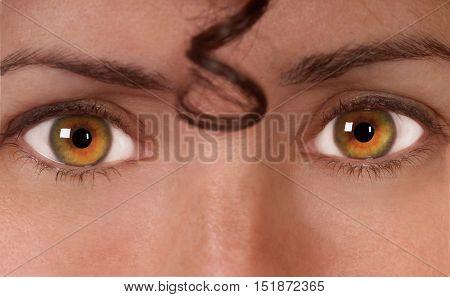 Green,Amber  Eyed Beauty Looks straight into Camera