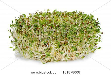 Alfalfa Sprouts Isolated On The White Background