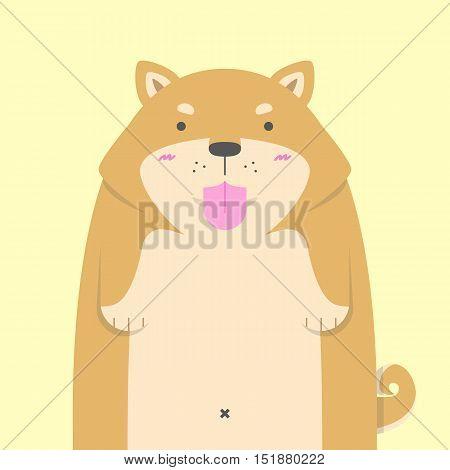 cute big fat Shiba Inu dog on yellow background