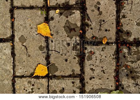 Paving slabs. Background tiles. Yellow leaves. Autumn background. The background for the text.