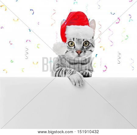 Beautiful cat in Santa Claus hat on festive background