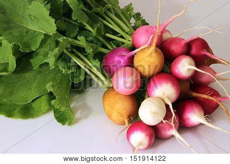 Fresh multi coloured radish on white background