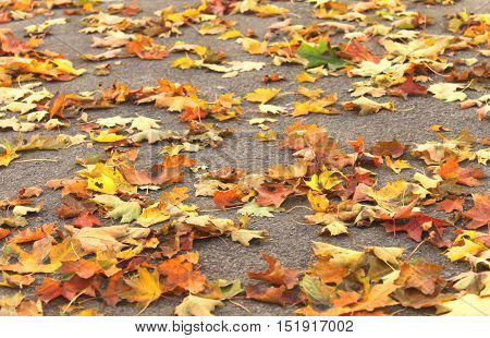 Colorful autumn leaves on pavement in city close-up