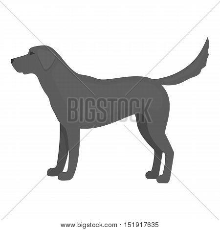Labrador vector illustration icon in monochrome design