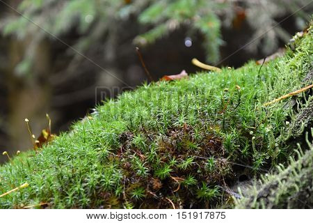 Moss on a stump in the autumn. Moss.