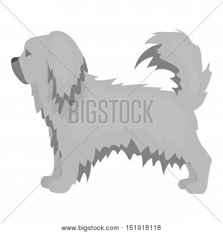 Pekingese vector illustration icon in monochrome design