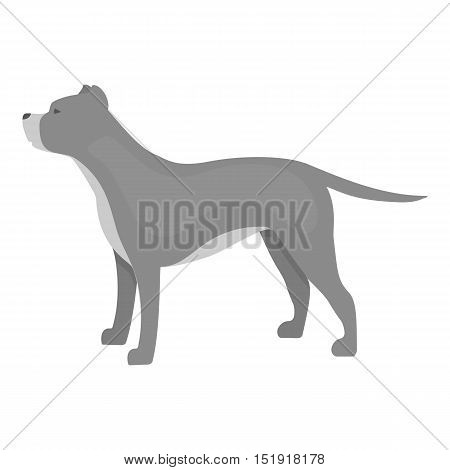 Pitbull vector illustration icon in monochrome design