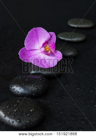 Spa concept with black basalt massage stones arranged chain and purple orchid flower covered with water drops on a black background