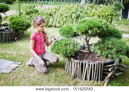 Little girl in red t-shirt sits and touches needles of bonsai pine tree outdoor in park.