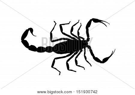 isolated black contour scorpion isolated on white background