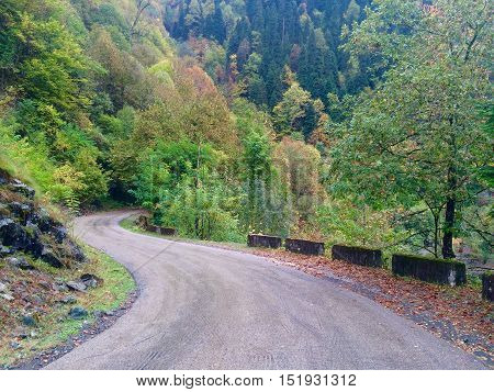 Empty curvy asphalt highway in mountains with colorful trees.