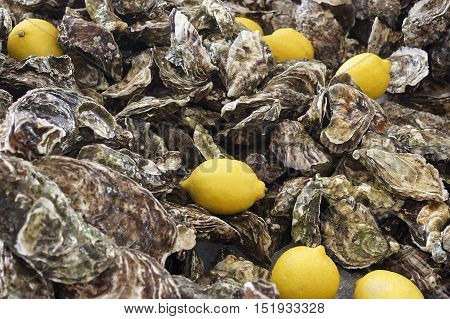 several yellow lemon on the background unsolved oysters