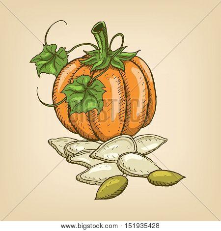 Seeds of a pumpkin with pumpkin. Vector illustration. Hand drawn illustration.