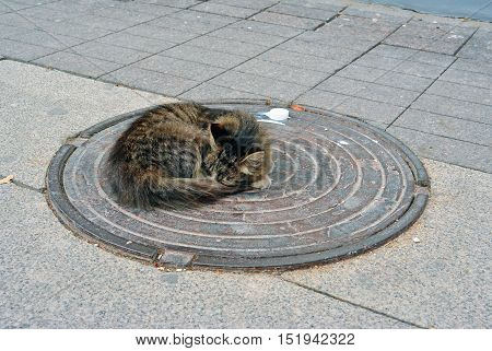 Cute cat slipping on the hatch. Homeless lonely kitten on the street
