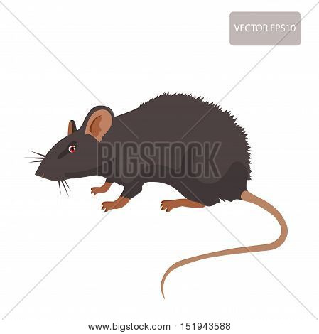Mouse Rat Vector. Rat Isolated On White Background. Rat Vector Disease. Harmful Rodent Parasite.
