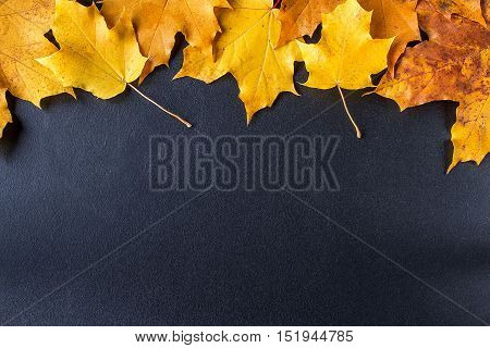 Yellow autumn leaves on black chalkboard background. seasonal concept