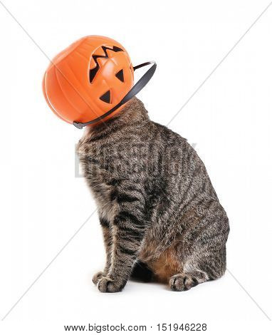 Curious cat with basket in shape of pumpkin on its head, on white background