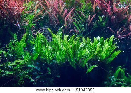 Aquarium With Water-plant And Animals