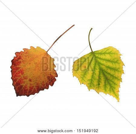 set of various colorful autumn leaves on white isolated background