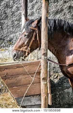 Chestnut horse are fed hay. Farm scene. Animal theme. Vertical composition.