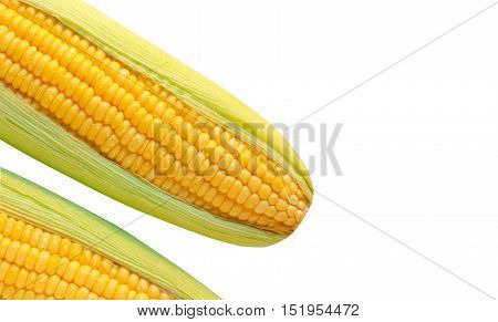 Ripe corn on the cob .yellow corn