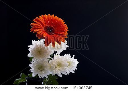 Orange Gerbera And White Golden-daisy With Water Drops