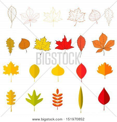 Set of the yellow autumn leaves. Vector design element.