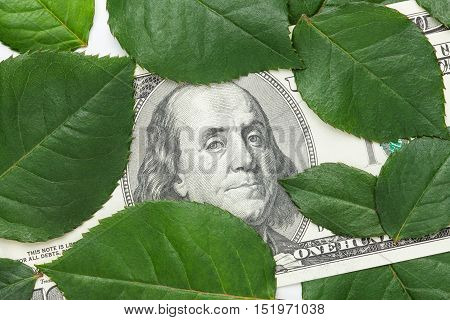 One hundred dollar banknote among green leaves. Focus on Franklin portrait. Money growth flower business new investments concepts.