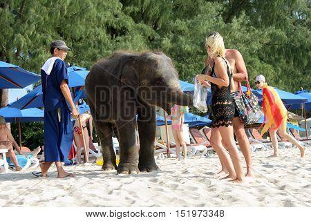 BANGTAO BEACH, PHUKET, THAILAND - NOVEMBER, 06 2013: Tourist fedding baby elephant on the beach in Asia vacation.
