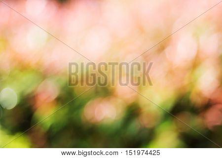 vintage nature flower bokeh background, Flower bokeh with spring bokeh