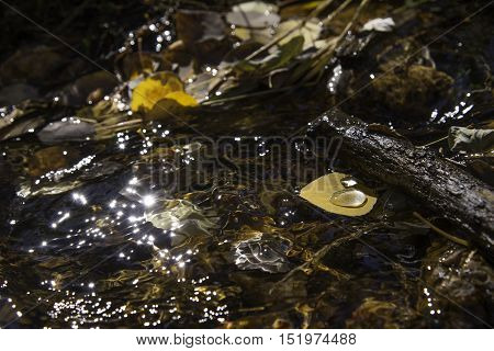 Aspen leaf in a chilly mountain stream