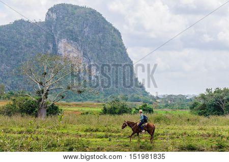 VINALES, CUBA - MARCH 19, 2016: Cuban cowbay in the Vinales Valley in Cuba