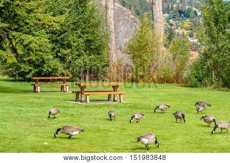 A picnic table with gorgeous view at Okanagan Lake, British Columbia, Canada.