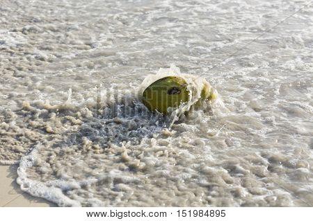 Coconut On The Beach, Mahe, Seychelles