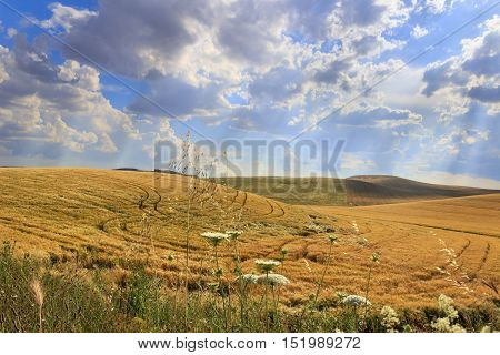 Between Apulia and Basilicata.Hilly landscape with cornfields.ITALY. Hilly landscape: cereal fields dominated by clouds.