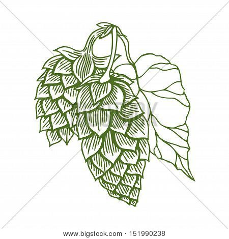 Hops vector visual graphic icon or logo, ideal for beer, stout, ale, lager, bitter labels and packaging etc. Hop is a herb plant which is used in the brewery of beer. Vector illustration.