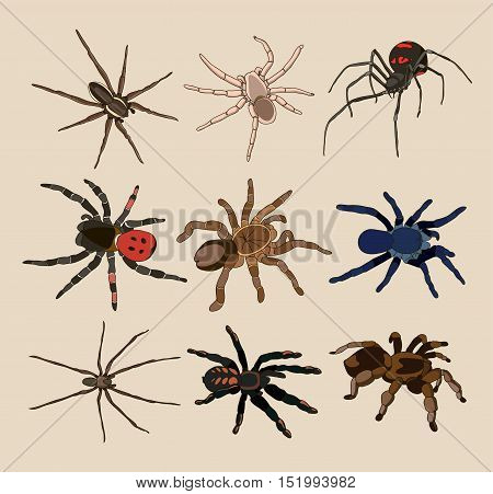 Vector of spiders set on light background