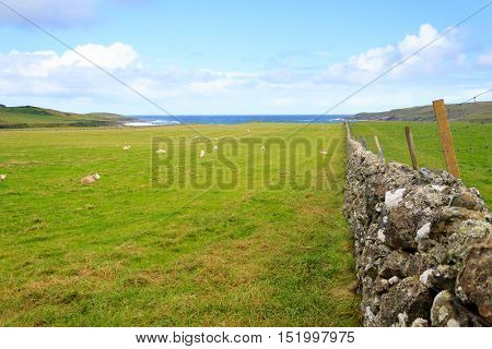 Stone Wall In Scottish Countryside