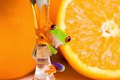 stock photo of glass frog  - A colorful red eyed tree frog on the stem of a glass in front of fresh oranges - JPG